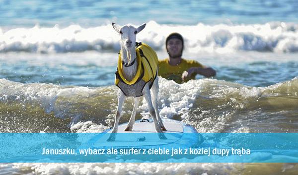 januszek-surfer